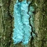 The blue blaze of the Buckeye Trail.