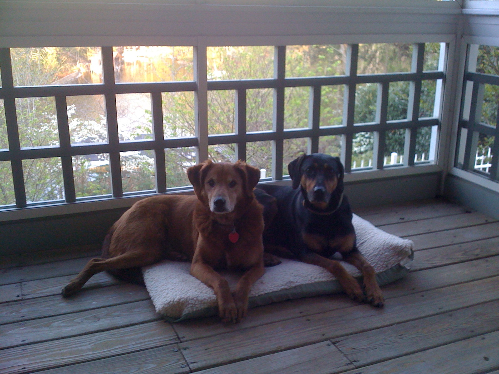 Ozzy and Gilly hanging out on our porch at the lake house in Knoxville.