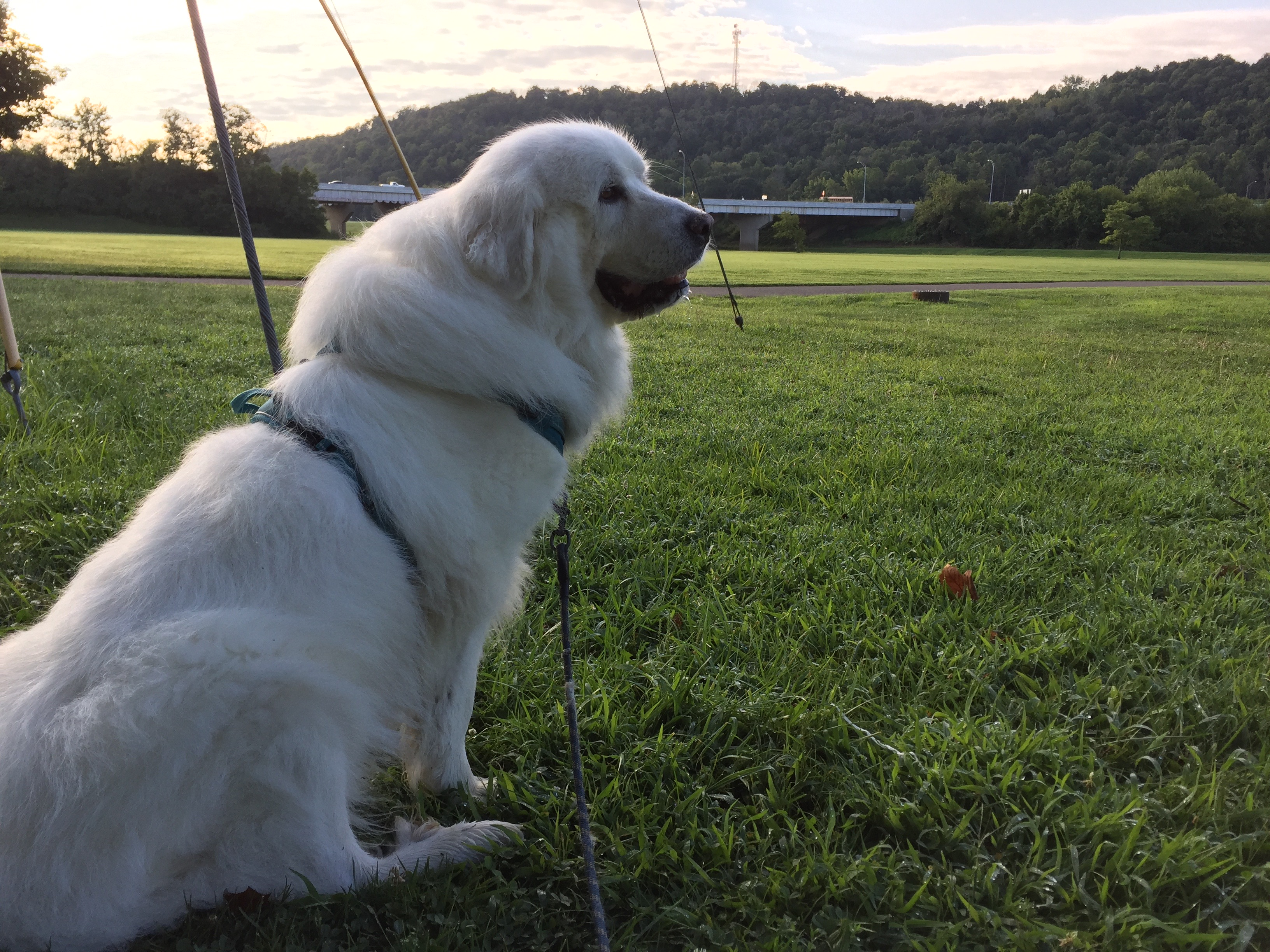 Sunny pauses to admire the morning during her walk.