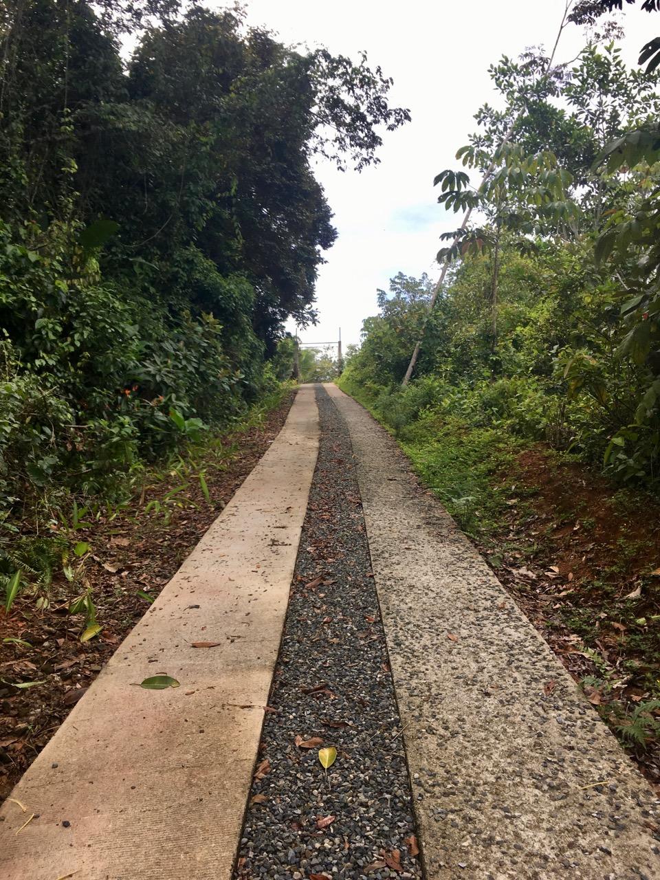 The driveway leading to PurUvita.